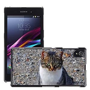 Just Phone Cover Etui Housse Coque de Protection Cover Rigide pour // M00139264 Cat felina Cara del gato gato de Ojos // Sony Xperia Z1 L39 C6903 C6906 C6943 C6902