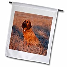 Danita Delimont - Dogs - Hound dog in a field, Big Horn MT of Wyoming - US51 JRE0140 - Joe Restuccia III - 18 x 27 inch Garden Flag (fl_97379_2)