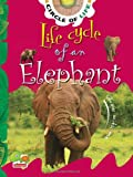 Life Cycle of an Elephant: Key stage 1 (Circle of Life)