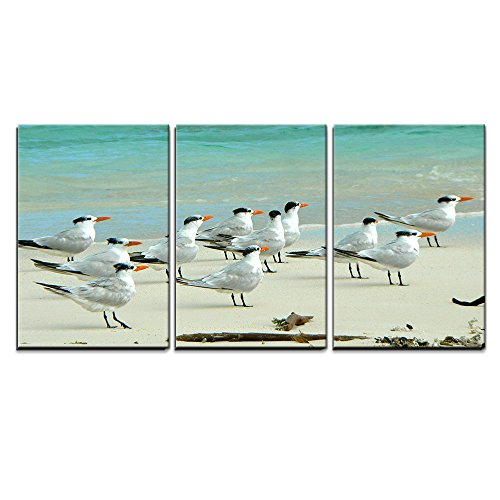 "Wall26 - 3 Piece Canvas Wall Art - Birds in the Beach in Los Roques - Modern Home Decor Stretched and Framed Ready to Hang - 16""x24\""x3 Panels"