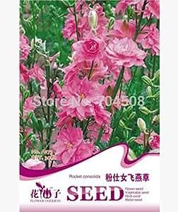FD1757 Rosa Larkspur de semillas Semillas Delphinium Consolida Flores ~ 1 paquete de 30 semillas ~