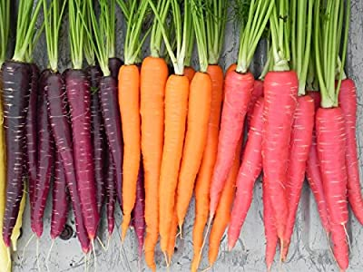 Rainbow Mix Carrot Seeds Choices to 1 LB Easy Grow Mix colors USA #258