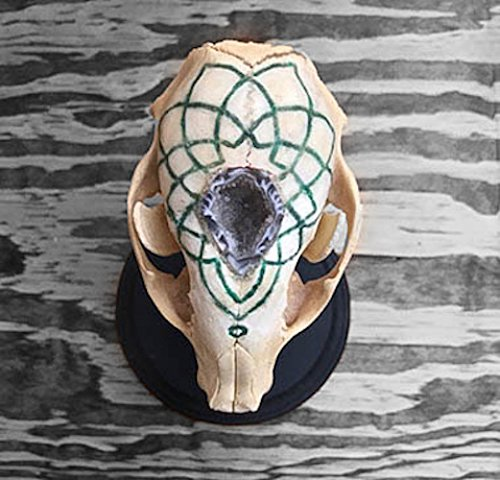 Real Raccoon skull with hand carved mandala shaped Arizona Jade, Aventurine, and White Crystal inlay. Ocos Geode in the middle. by Desert Lady Designs