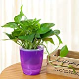 Cheap Mkono 3 Pack Self Watering Planter Plastic Flower Pot, Purple
