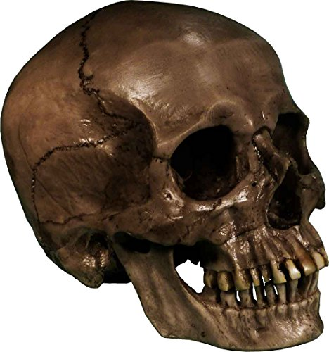 Authentic Life Size Replica Aged Relic Human Skull Reproduction in Crypt Dust Grey color #3020-3093, by Nose Desserts