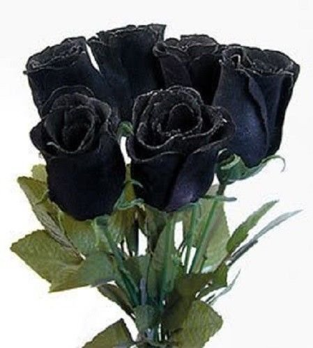 5 Black Rose Rosa Bush Shrub Perennial Flower Seeds