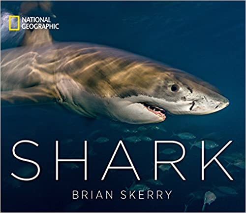 SHARKS AND STINGRAYS - BOOKS 51SP1-fS0pL._SY430_BO1,204,203,200_