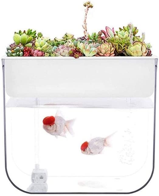 LKNJLL Back to The Roots Water Garden, Self-Cleaning Fish Tank That Grows Food,Mini Aquaponic Ecosystem (Great Gardening Gift & Family Project)