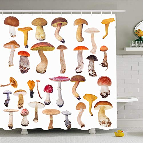 Ahawoso Shower Curtain 72x72 Inches Spotted Red Toadstool Large Mushrooms White Nature Mushroom Orange Autumn Birch Bolete Boletus Design Waterproof Polyester Fabric Set with Hooks ()