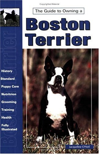 Guide to Owning a Boston Terrier (Boston Terrier Breed Standard)
