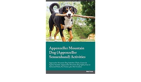 Appenzeller Mountain Dog Appenzeller Sennenhund Activities