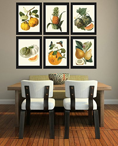 Fruit Print Set of 6 Antique Beautiful Botanical Melon Cantalope Pineapple Pear Orange Lemon Citrus Tropical Plants Garden Nature Home Room Decor Wall Art Unframed (Modern Fruit Pear)