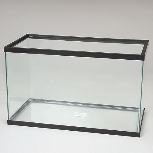 20 gallon standard glass tank