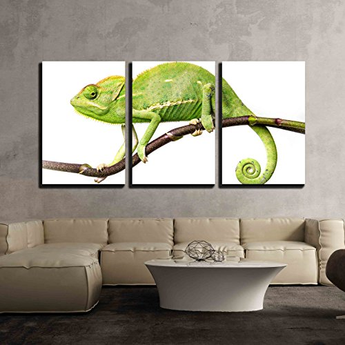 wall26 - 3 Piece Canvas Wall Art - Chameleon - Chamaeleo calyptratus on a Branch - Modern Home Decor Stretched and Framed Ready to Hang - 16