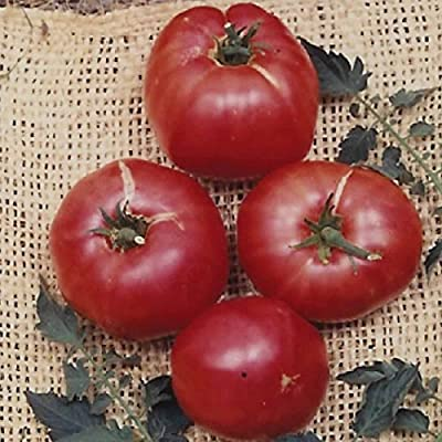 Tomato Garden Seeds - German Johnson - Non-GMO, Heirloom, Vegetable Gardening Seed