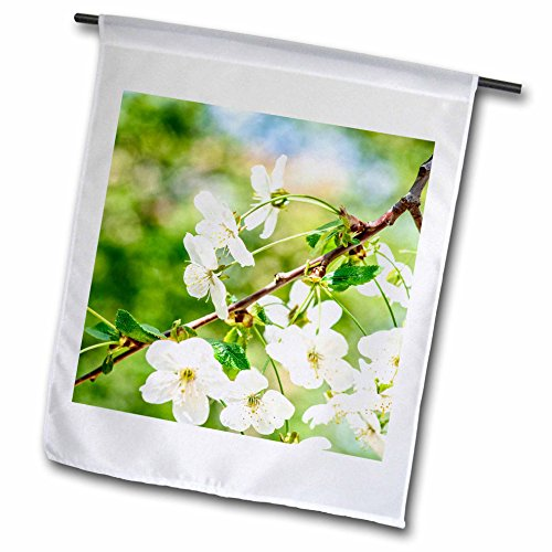 3dRose Alexis Photography - Flowers Cherry - Beautiful cheerful cherry blossoms, green, blue, beige background - 12 x 18 inch Garden Flag (fl_271723_1) Cheerful Blossoms