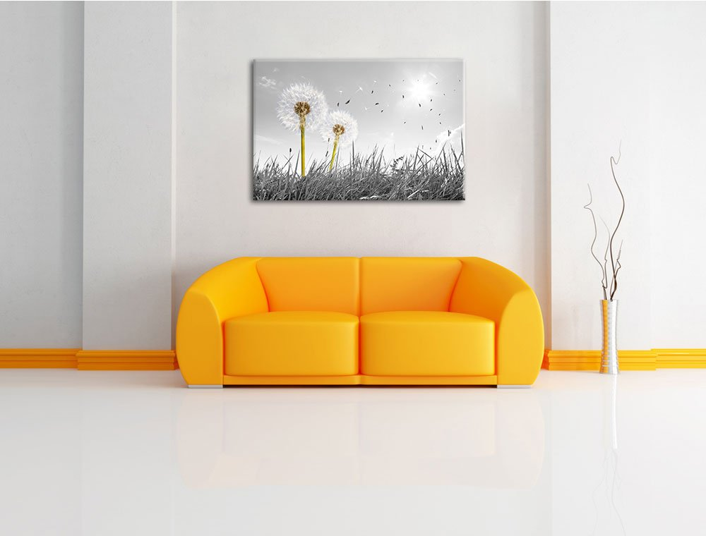 Amazon.de: Pusteblumen auf Wiese schwarz/weiß Format: 120x80 auf ...