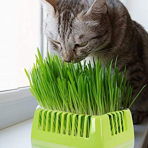 KORAM Seed Tray Kit, Seed Planting Tray for Cat Grass, Tray for Seedling Organic Pet Cat Grass Growing with Non-Slip Stickers, Natural Hairball Control Healthy Treat for Cats (Seed Not Included)