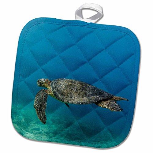 3dRose Danita Delimont - Turtles - Galapagos Green Sea Turtle underwater, Ecuador - 8x8 Potholder (phl_228987_1) (Galapagos Turtle)