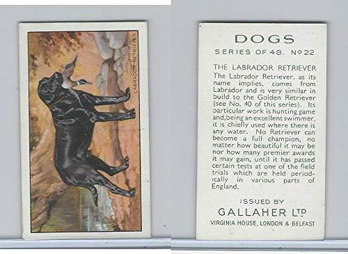 (G12-81 Gallaher Tobacco, Dogs, 1936, 22 Labrador Retriever)