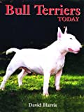 Bull Terriers Today
