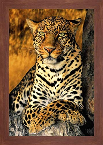 CA, Los Angeles Co, African Leopard by Dave Welling - 24