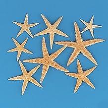9GreenBox - 30 x Real Starfish