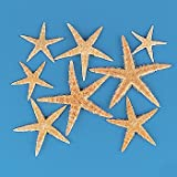 Fun Express Real Starfish Decoration (30 Piece)