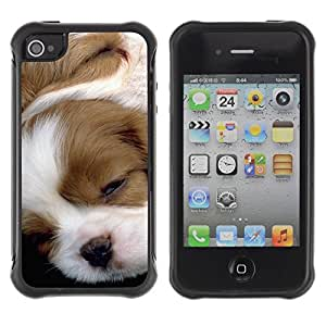Paccase / Suave TPU GEL Caso Carcasa de Protección Funda para - Pointer English Foxhound Jack Russell Puppy - Apple Iphone 4 / 4S