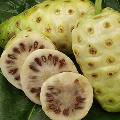 HOTUEEN NONI Morinda Citrifolia Tree Seeds Rare Garden Fruit Tree Plants Seeds Fruits : Garden & Outdoor