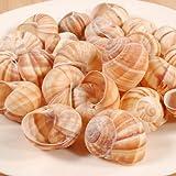 Extra Large Empty Escargot - 24 pieces - 1 pack - 24 pieces