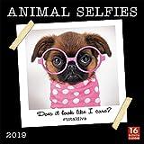 Animal Selfies 2019 Wall Calendar