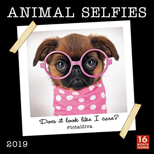 Animal Selfies 2019 Wall Calendar