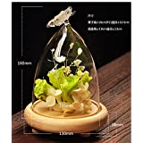 Glass Cover Landscape Vase Container Plant Flower Butterfly Decor + Tray