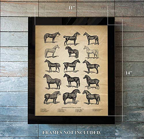 Vintage Farm Animal Print - Types of Horses - Unique Wall Art of a Classic Image - Perfect Gift for All Horse Lovers