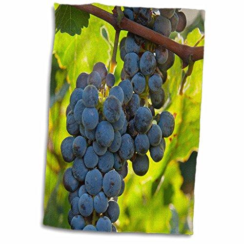 3drose-danita-delimont-grapes-china-xinjiang-xinjiang-uyghur-manas-cabernet-sauvignon-grapes-12x18-h