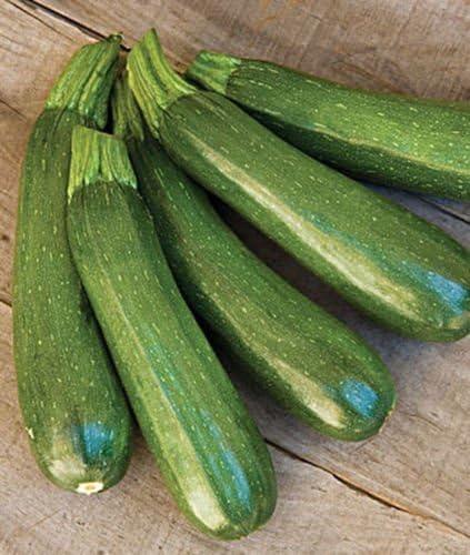 30 Black Beauty Squash Summer Zucchini-Non GMO-Open Pollinated.