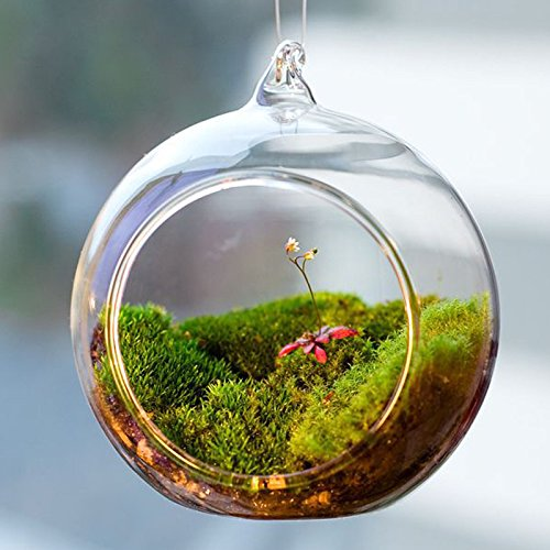 Flair Set of 6 Hanging Glass Globe Plant Terrariums - Glass Orbs Air Plants Tea Light Candle Holders Succulents Moss Miniature Garden Planters Home Decor Indoor Garden DIY Gifts (4'' Tall by 4'' Diamete