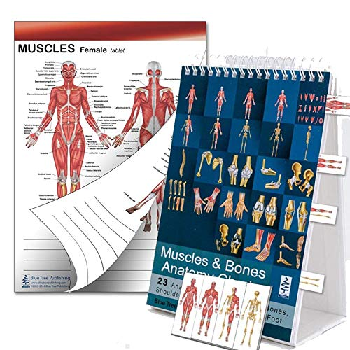 Muscle and Bones Anatomy Flip Book, Muscle Two Sided Table and Sticky Tabs