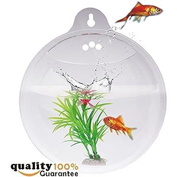 Amazon Com Pmland Wall Mounted Acrylic Fish Bowl Pet