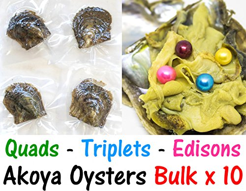 10 Akoya Oysters Bulk - 2x QUADRUPLET 2x TRIPLETS 2x TWINS + 2 Exotic Singles + 2x EDISONS - Akoya Oysters with Pearls Inside - Pearl Party Oysters - Wholesale - Pearls Akoya Wholesale