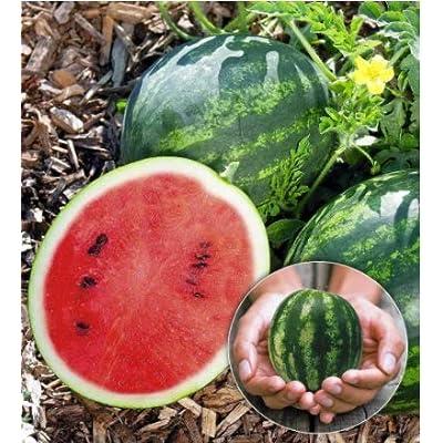 Halffle flowerseeds- Watermelon Seeds Fruit Seeds Perennial Hardy Succulent Seeds for Balcony, Terrace, Garden : Garden & Outdoor