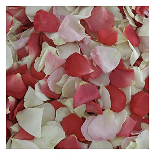 Rose Petals. 600 Petals. Pretty in Pink Preserved Freeze-dried Rose Petal Blend by Flyboy Naturals- 15 cups Rose Petals