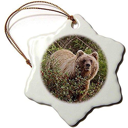 Rose Porcelain Stove - Bowen Rhodes Arctic Grizzly Bear, Brooks Range, Alaska, Usa-Us02 Hro0736-Hugh Rose-Snowflake Ornament, 3-Inch, Porcelain