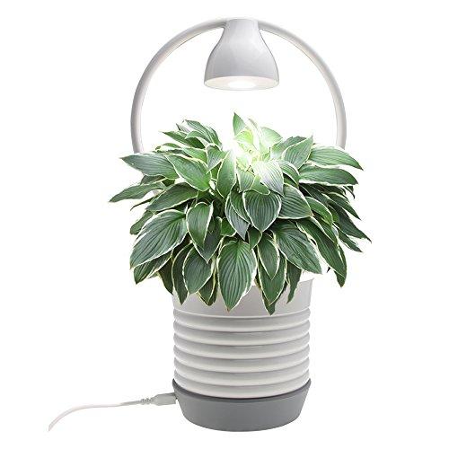 Vegetable Garden Light Requirements - 5