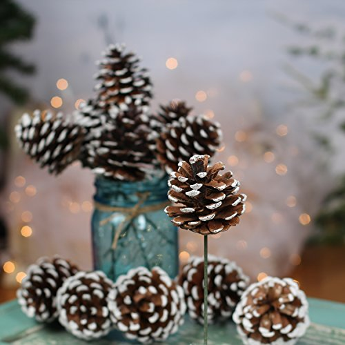 Factory Direct Craft Package of 12 Natural Pinecone Picks with Faux Snow Accents