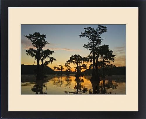 Framed Print of Sunrise and bald cypress (Taxodium distichum) trees with Spanish moss, Caddo by Fine Art Storehouse
