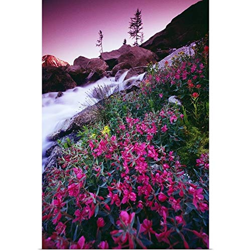GREATBIGCANVAS Poster Print Entitled Wildflowers, Bugaboo Provincial Park, British Columbia, Canada by Bilder Buch 12