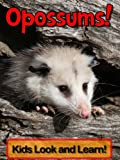 Opossums! Learn About Opossums and Enjoy Colorful Pictures - Look and Learn! (50+ Photos of Opossums)