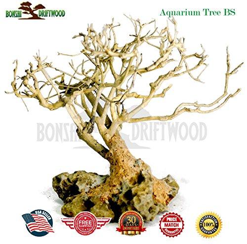 The 8 best underwater bonsai tree